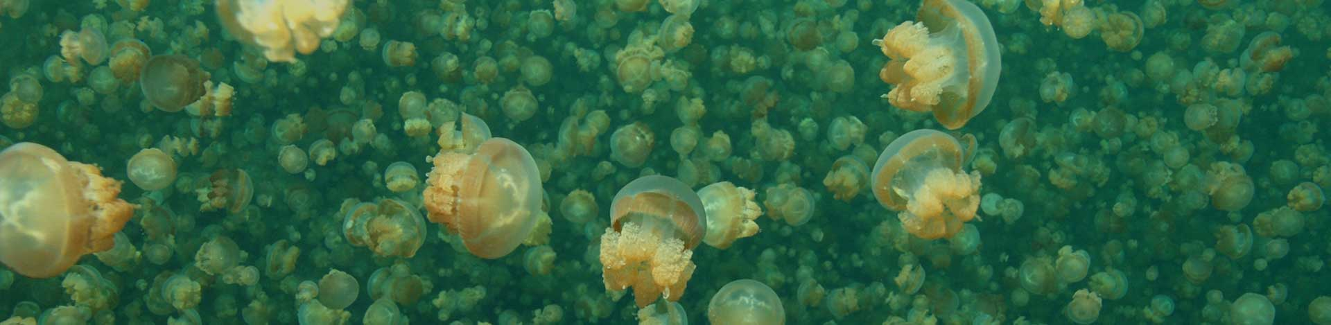 Jellyfish Lake - Coral Reef Research Foundation