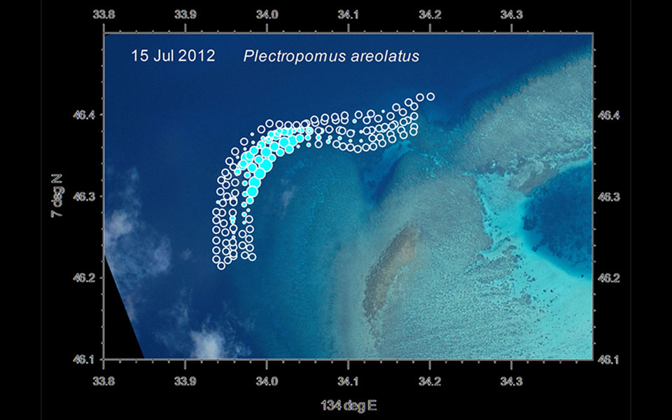 This GPS density plot shows not only the areas where the fish are, but also the areas that were surveyed and they were not present. The geographic extent of an aggregation is quickly apparent from a single species plot such as this for Plectropomus areolatus at Ebiil channel in Palau.