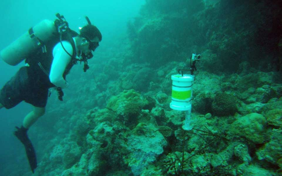 Time-lapse camera placed on the Lutjanus fulvis aggregation and set to record for one week